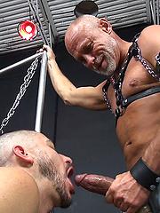 Daddy Max Stark Breeds Owen Powers
